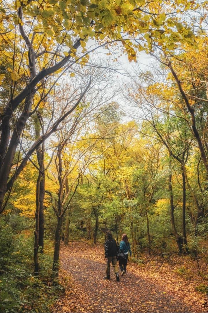 숲길을 함께 걸어요