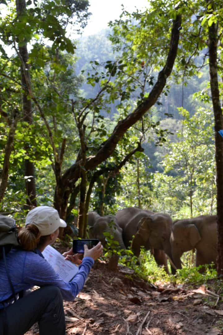 Observe and record elephants
