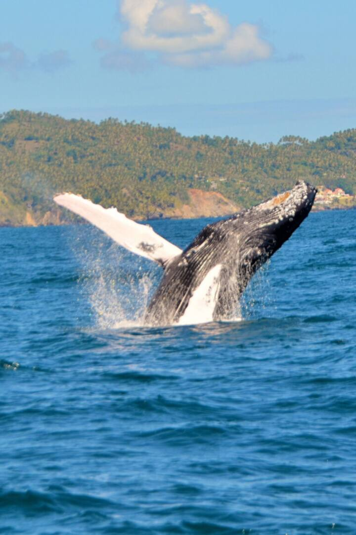 Whale saying hi!