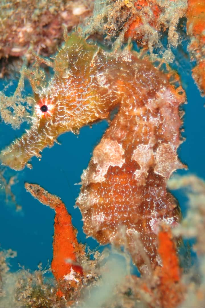 Sea horse.. I love them!!
