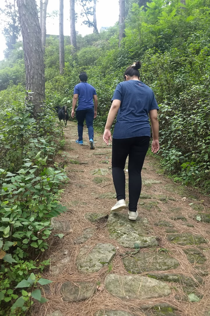 Walk through the pine & oak forest