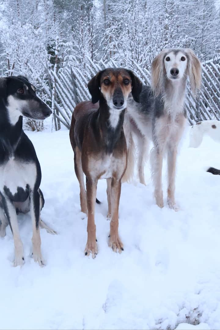 Meet the pack!