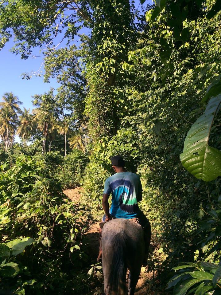 Horseback into the jungle