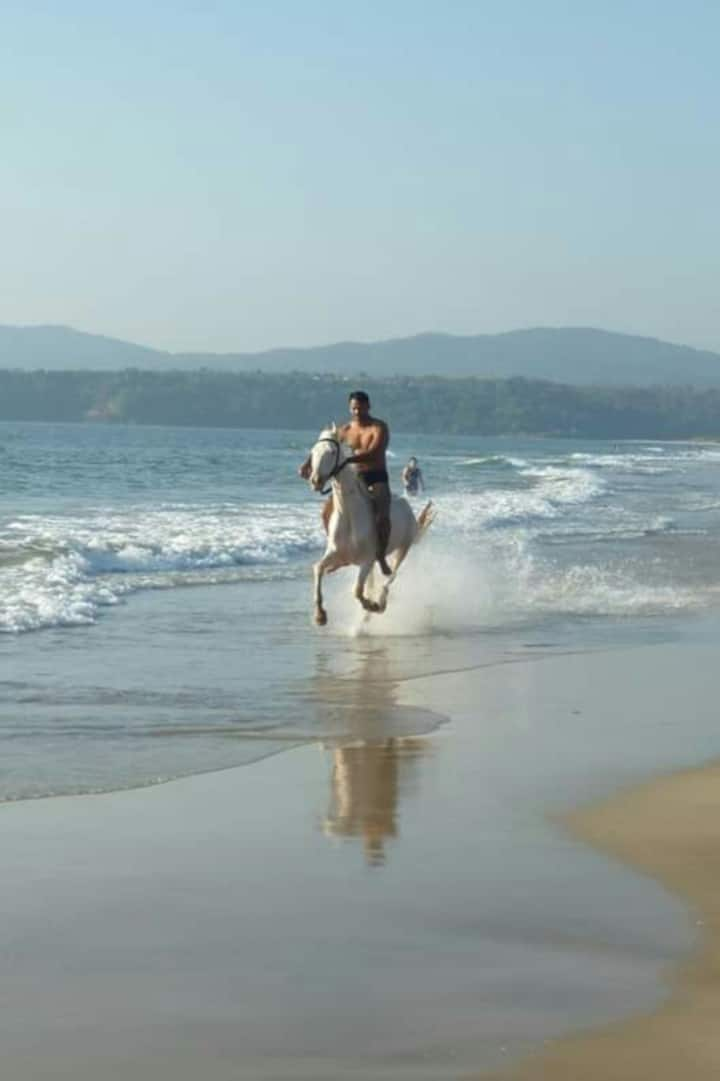 Feel the raw thrill of a gallop