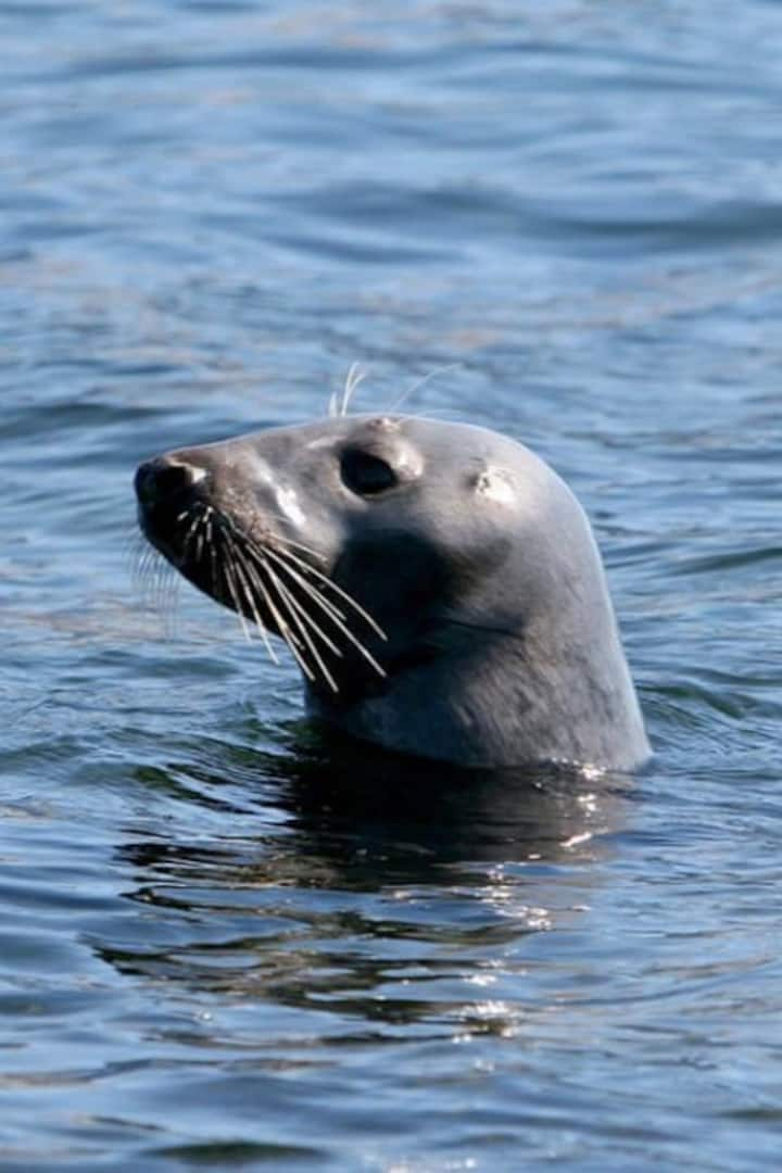 Seals and Porpoise are Common