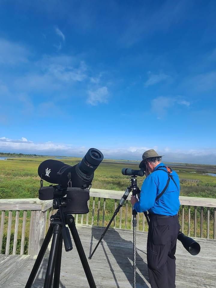 Birding Pea Island NWR