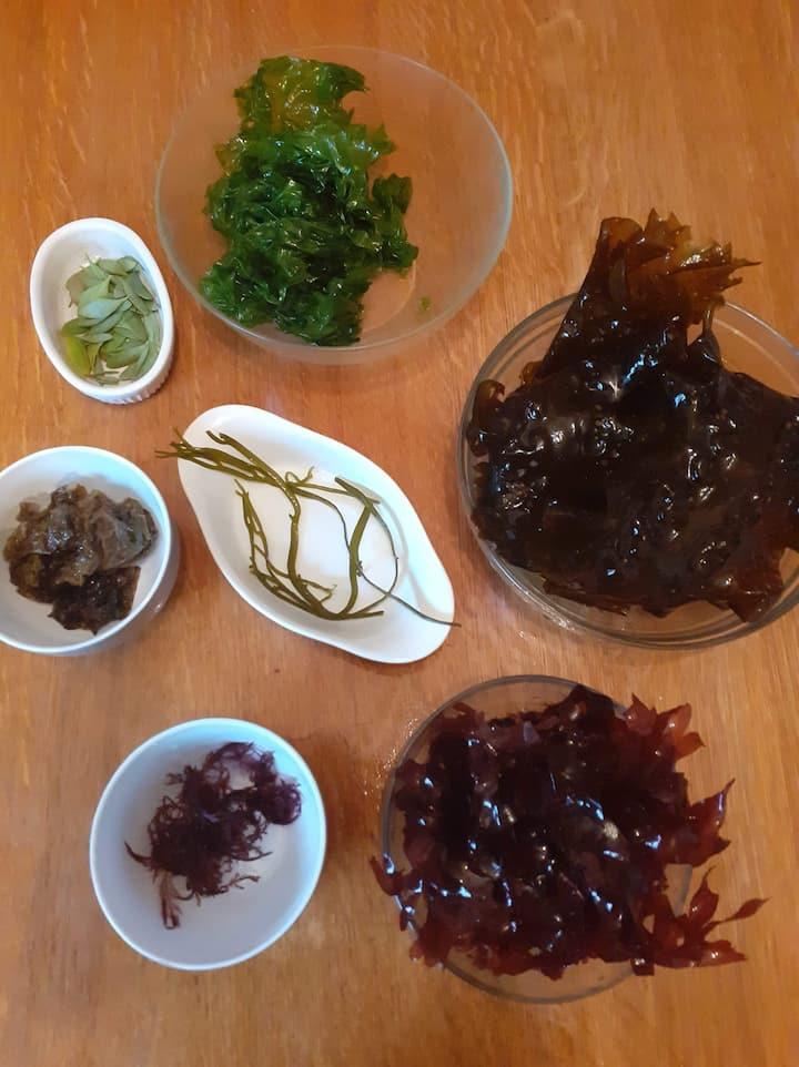 Algues fraîchement cueillies