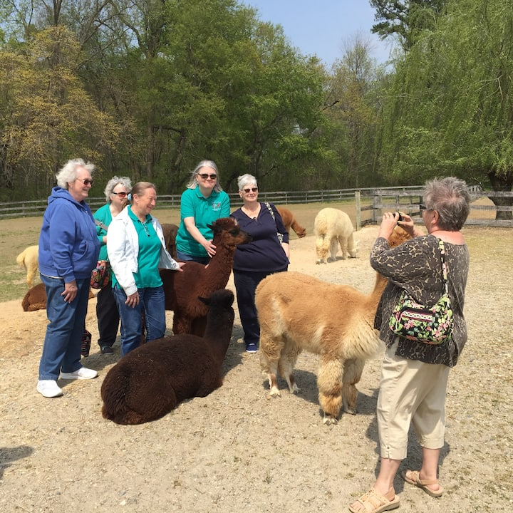 Alpacas Love Photo Ops