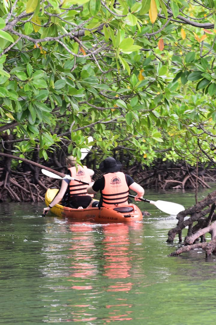 Navigate around the mangrove roots