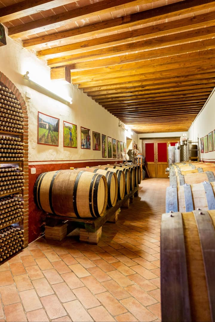 A part of the cellar Santo Stefano