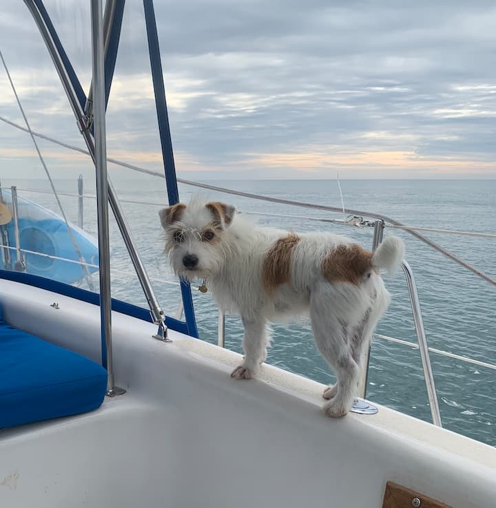 Capt. Jack on dolphin watch!