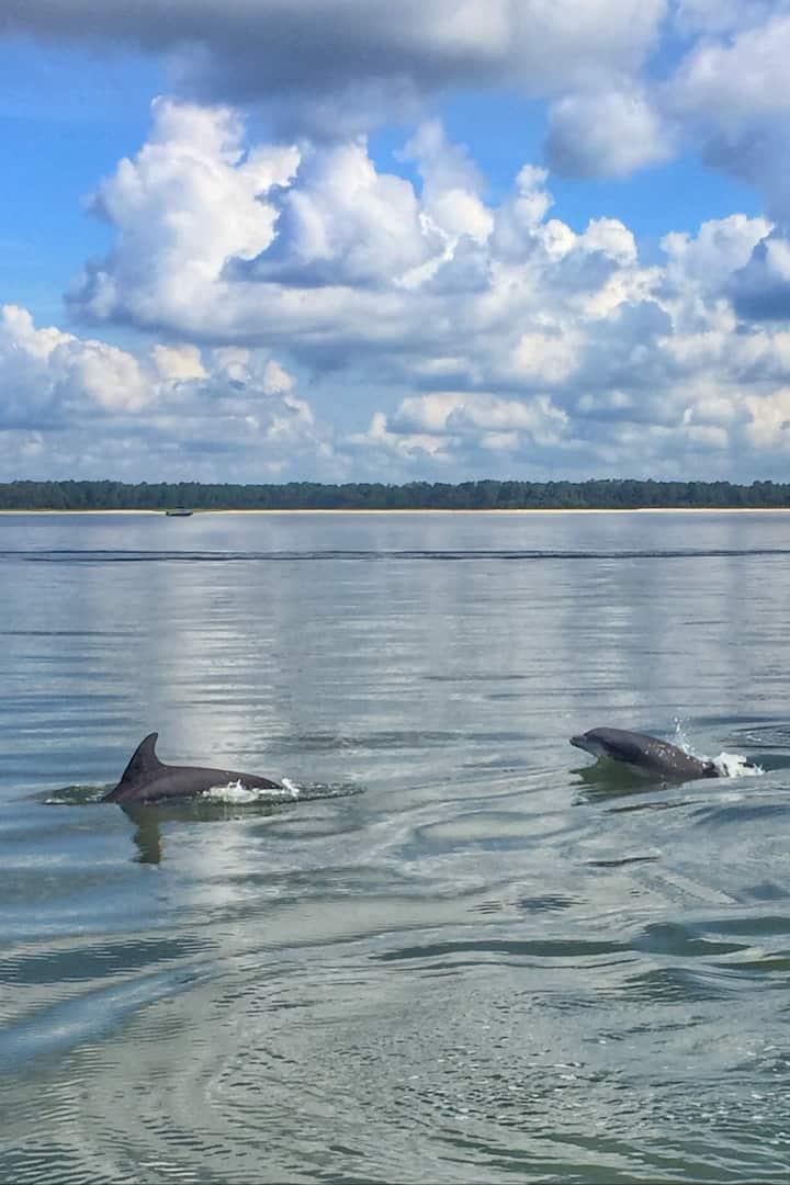 Atlantic Bottlenose Dolphins