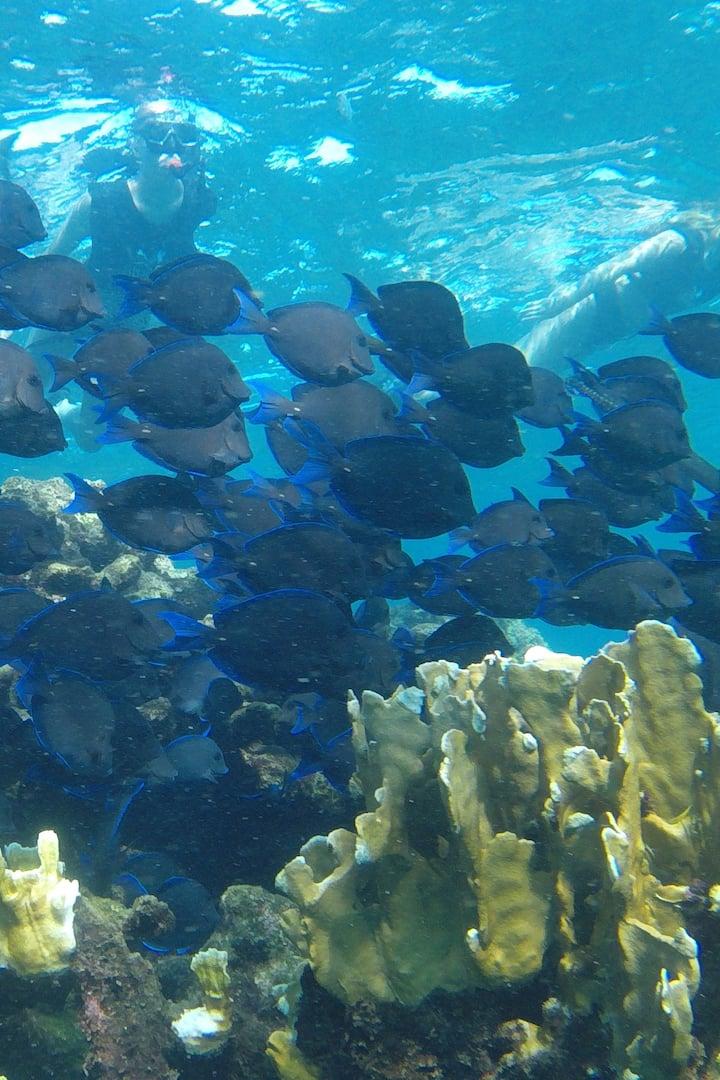 Sitio de snorkeling