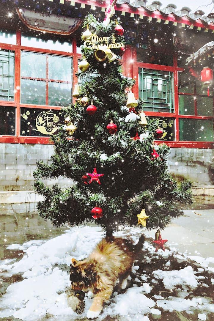 Christamas Decoration 圣诞节
