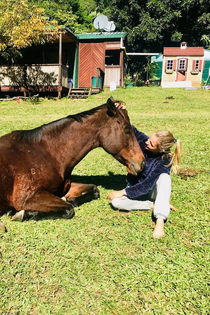 learn to connect with  our horses