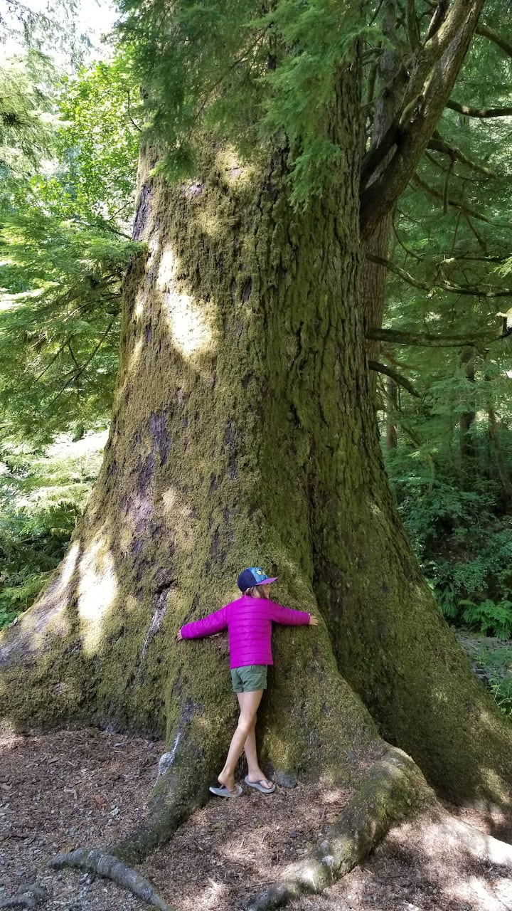 Hug a 2000yr Old Tree