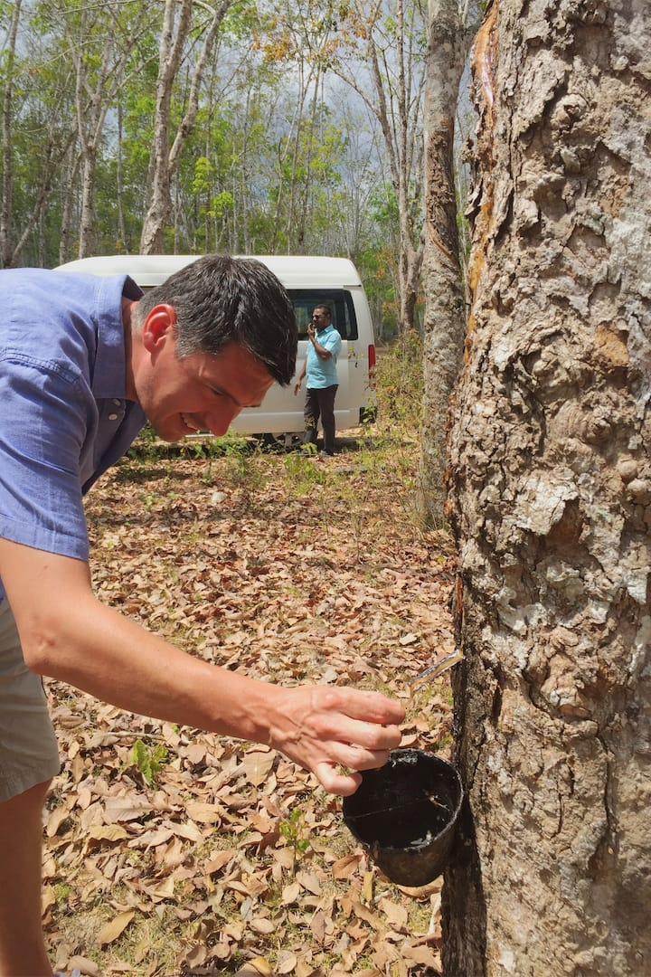 Rubber Tapping Plantation
