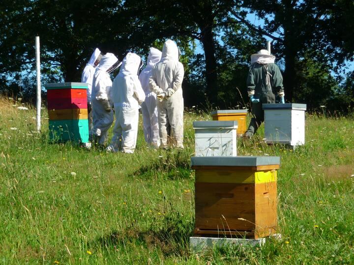 Nous visitons les ruches