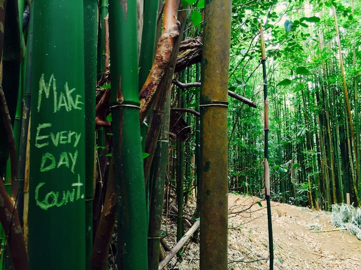 Hike through bamboo forests!