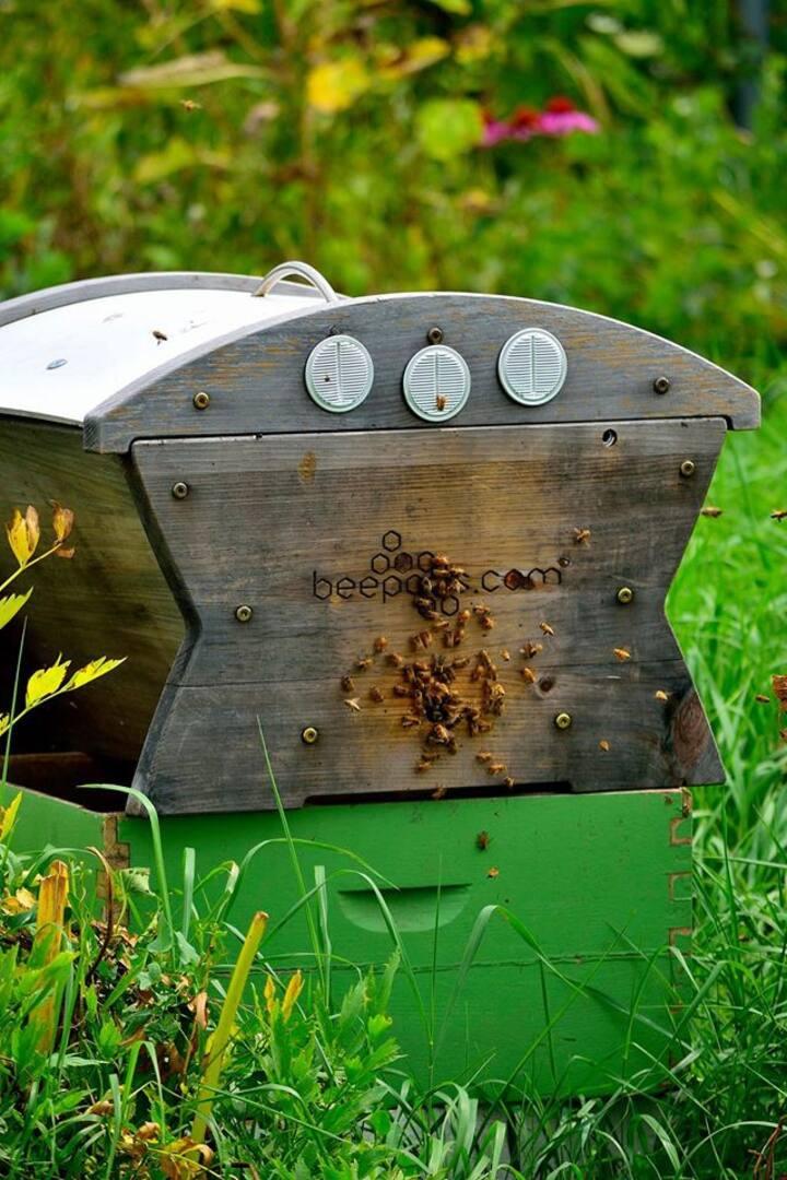 Garden beehive.