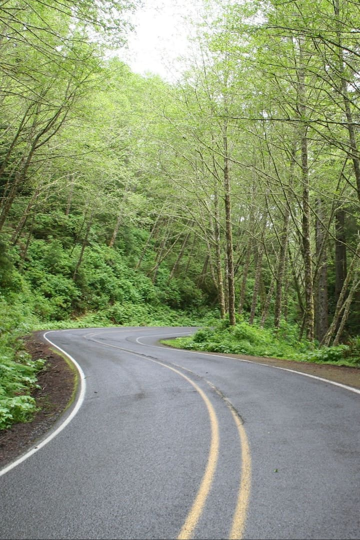 Part of the road travels via forest