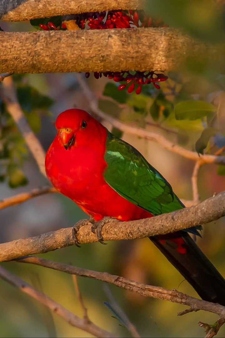 The area has colourful local birds
