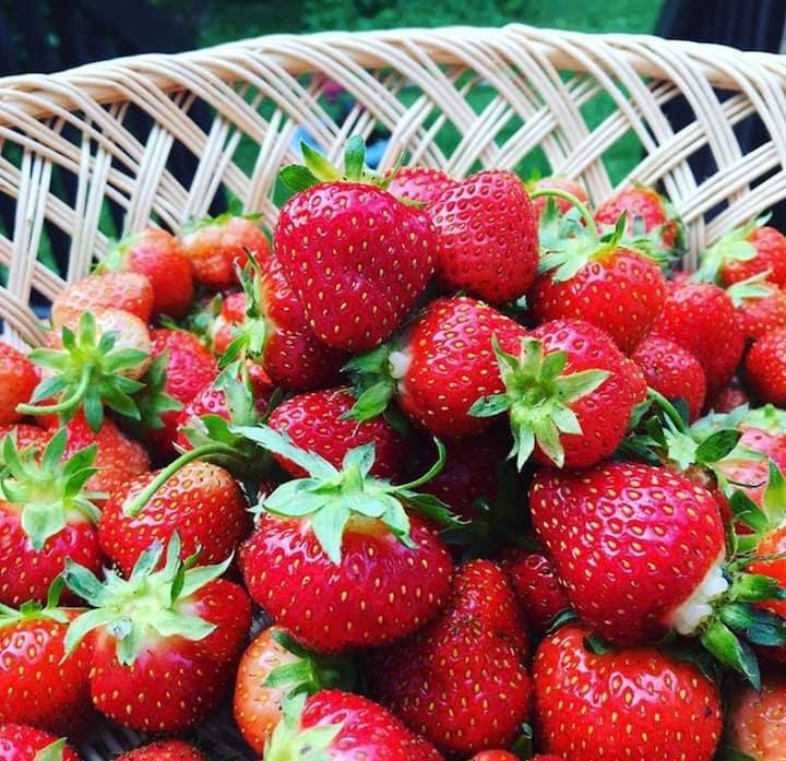 Seasonly abundant red, ripe strawberries
