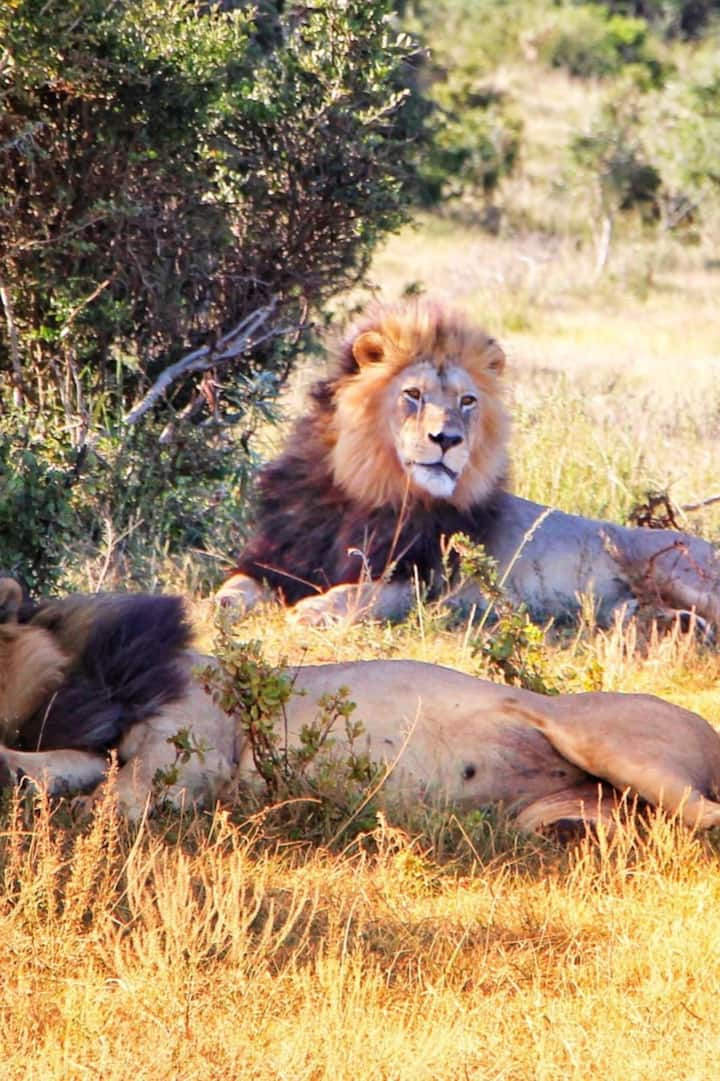 Dominant coalition in the Addo Park