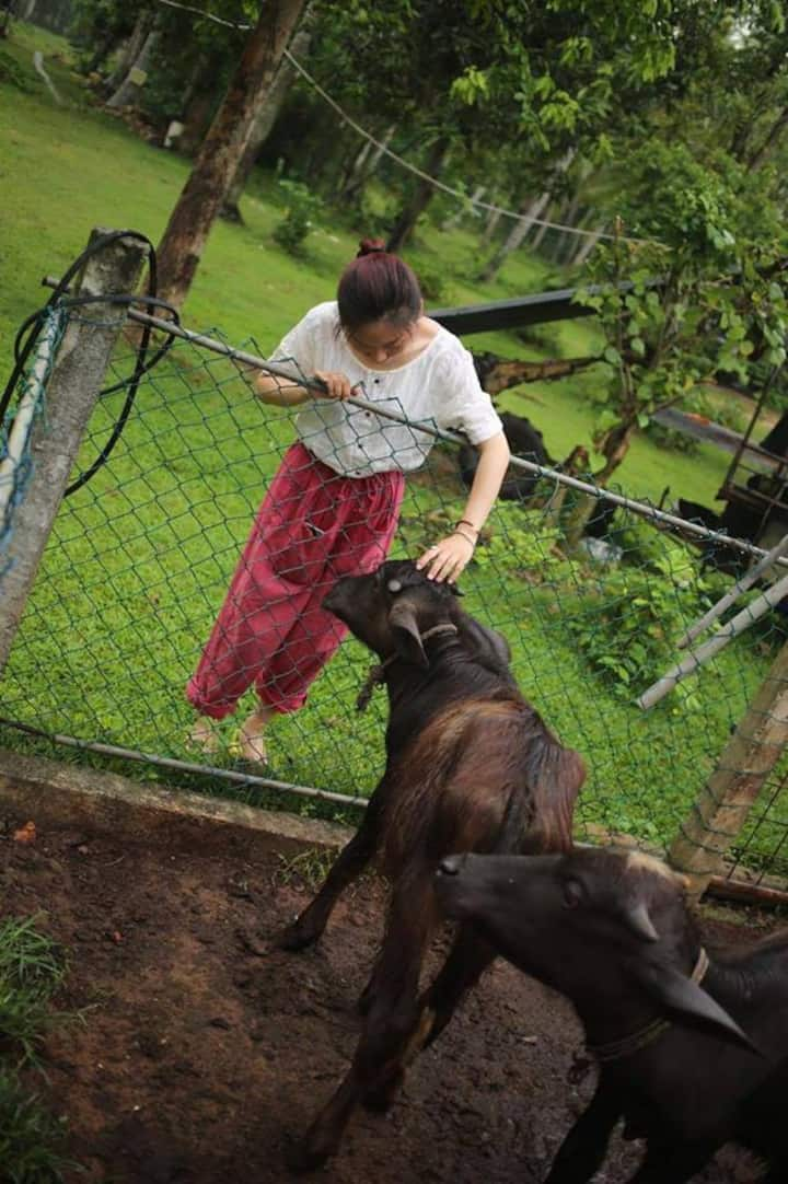 Petting the baby buffalo