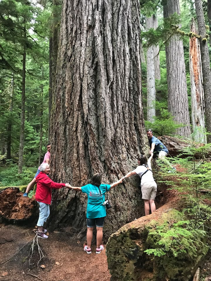 Group hug in an old growth forest