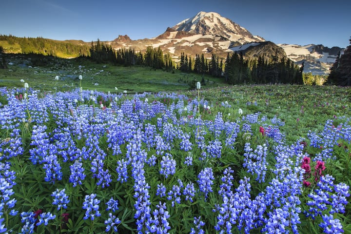 Wander stunning wildflower fields