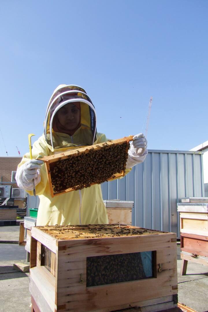 Examining the Honeybees