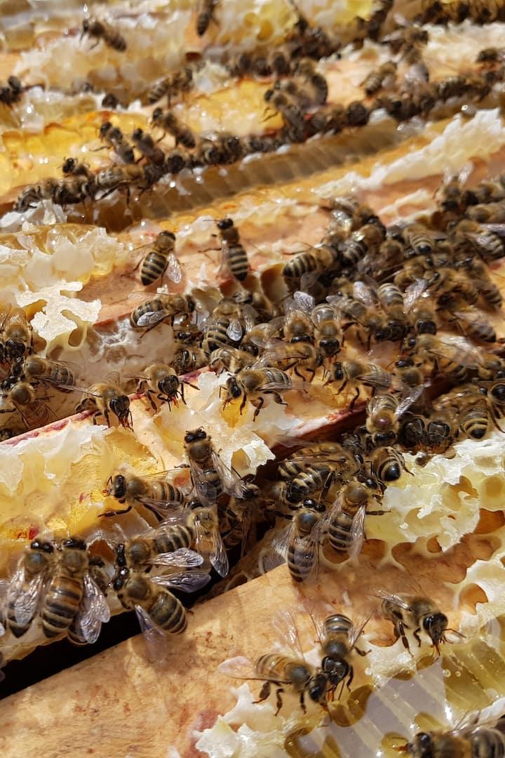 Close up of Bees at work