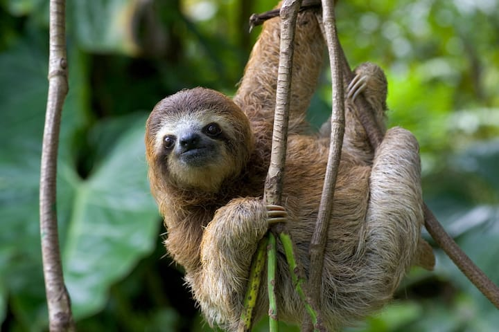 Sloths on the way