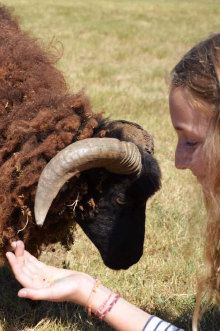 Les moutons sont gourmands!