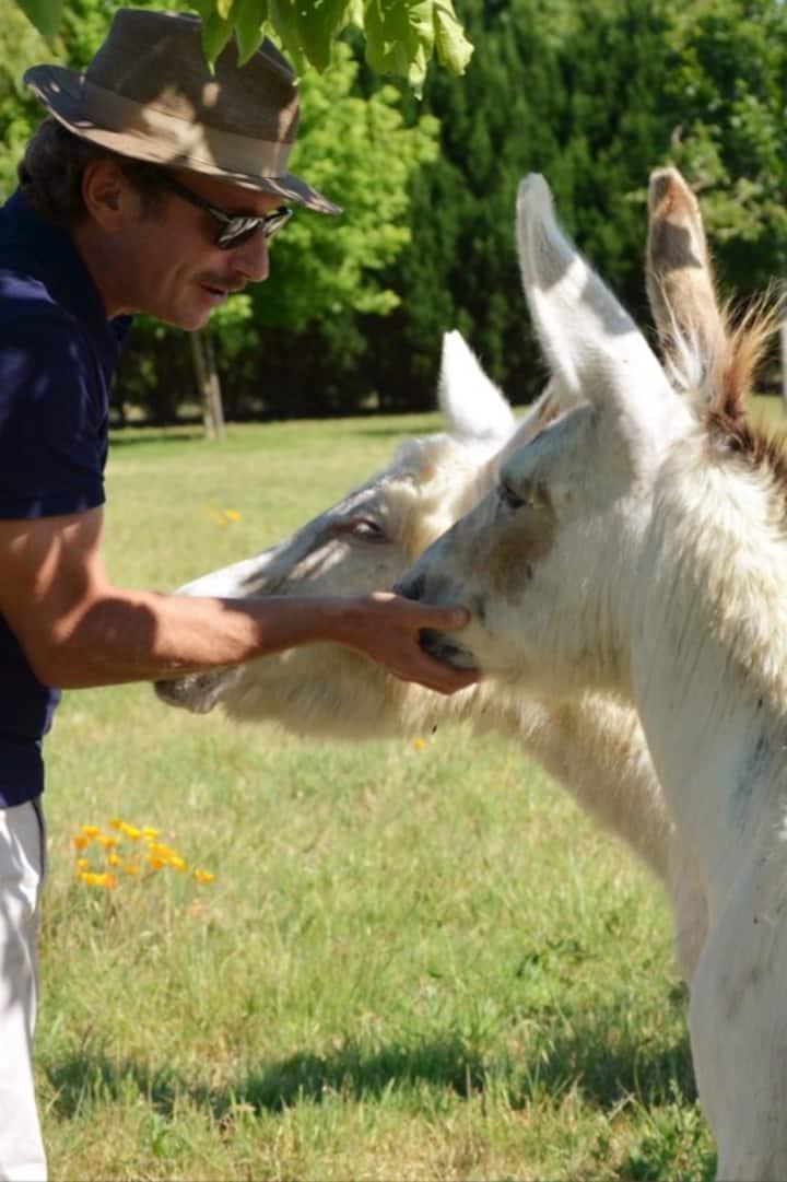 Nos 2 ânes sont très affectueux