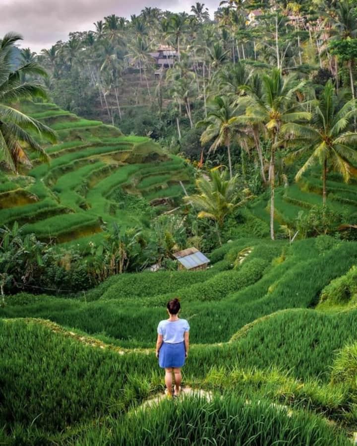 Rice teras Tegallalang