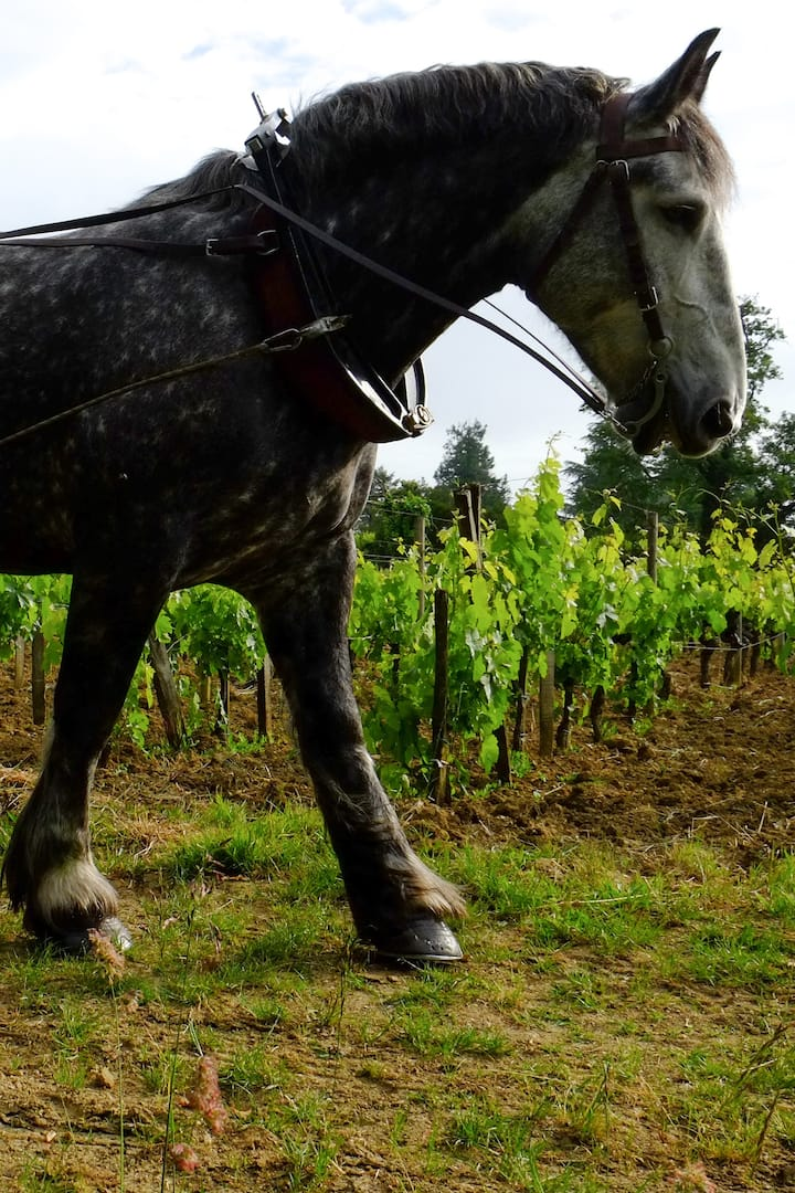 Laboure à cheval