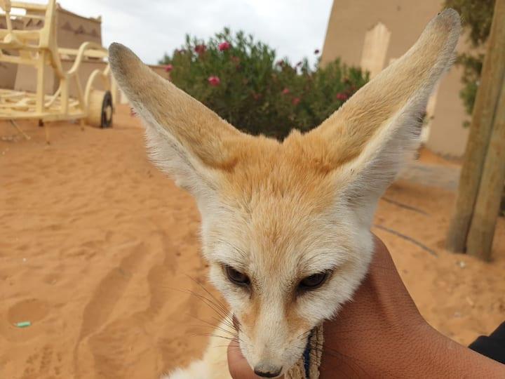 "Fenec""Fox"""