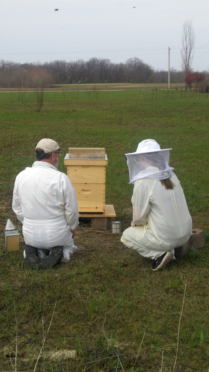 After the installation we watch the hive