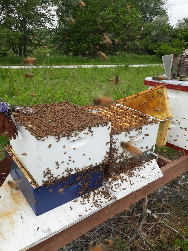A new hive during inspection.