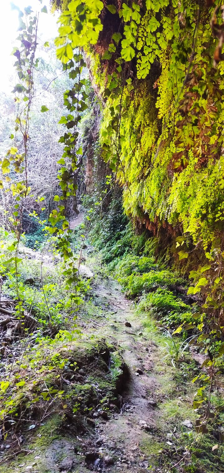 Encantador bosque mediterraneo