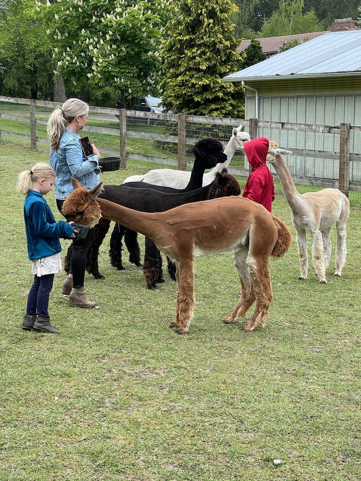 The alpacas love to be fed