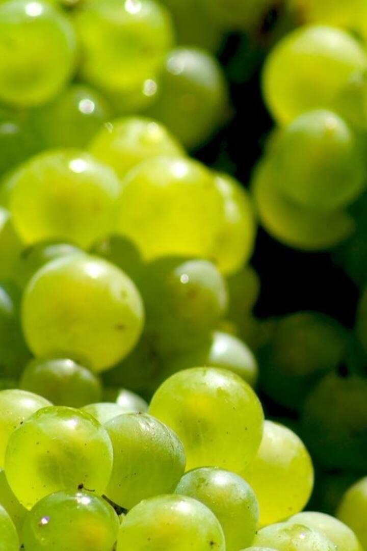 Grand cru blanc de blancs - Chardonnay