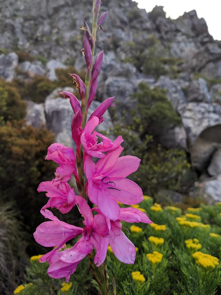 Fynbos plants and flowers