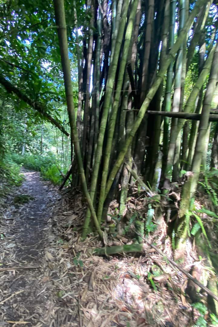 Les bambous.