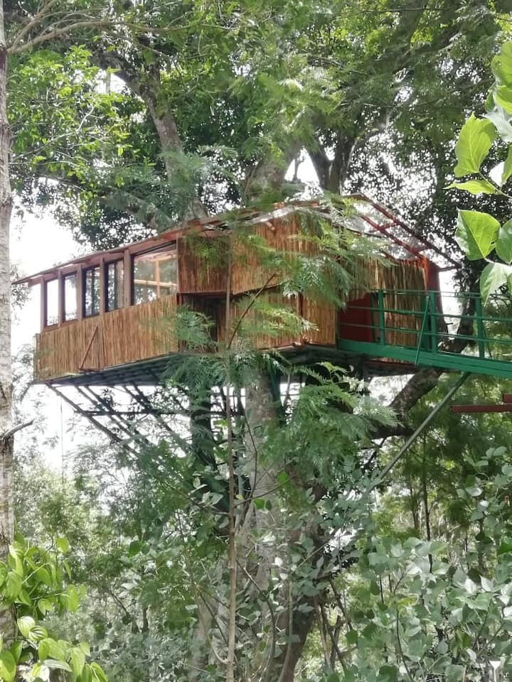 Treehouse 100 foot high on one tree alon