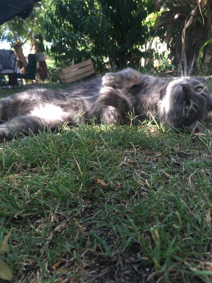 La gata Maga, princesa y co anfitriona