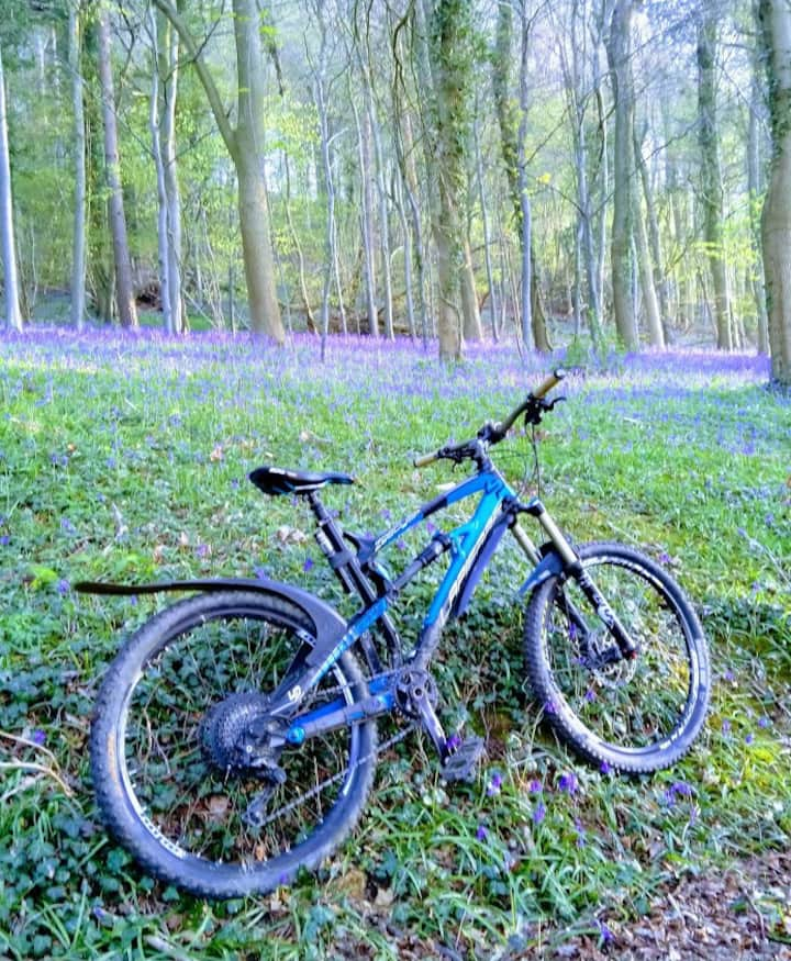 Biking by the bluebells