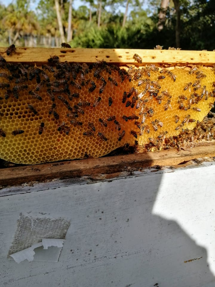 Building the honeycomb
